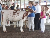 August 5, 2013: After three years, the Senator beat the competition at the Reading Fair Celebrity Showmanship Contest this year.