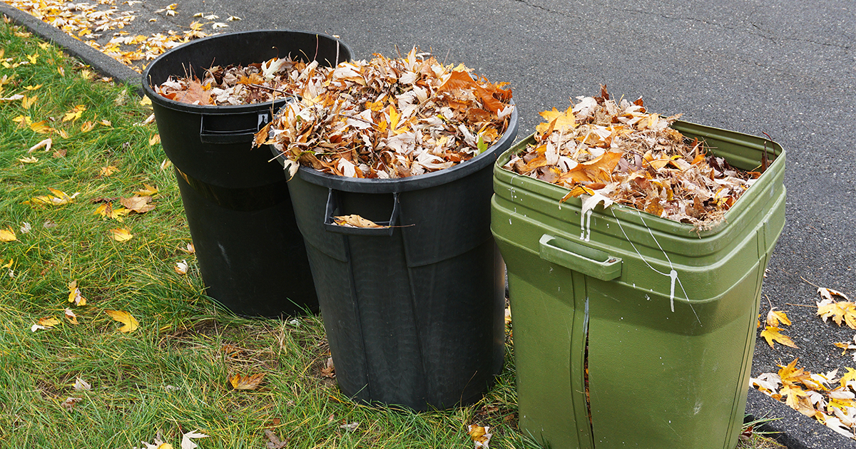 Leaf Collection